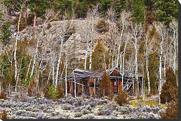 Rural Rustic Rundown Rocky Mountain Cabin by Bo Insogna