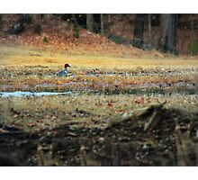 Green Winged Teal Photographic Print