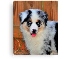 Puppy Canvas Print