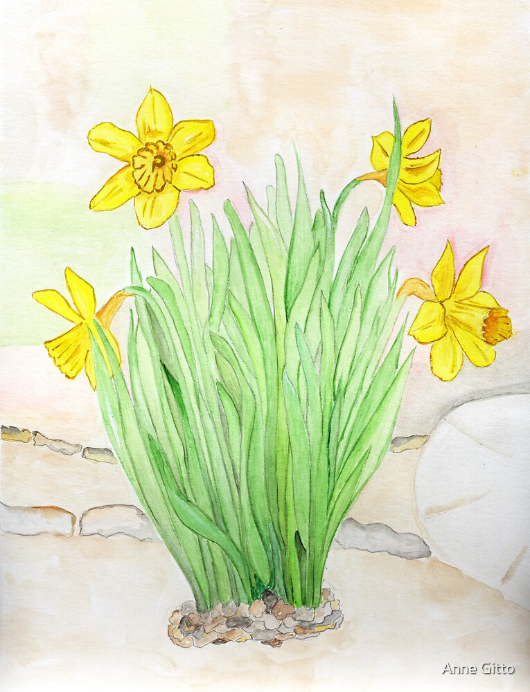 Daffodils Spring 2013 by Anne Gitto