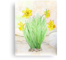 Daffodils Spring 2013 Canvas Print
