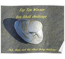 Top Ten Winner - Sea Shells Poster