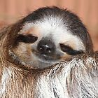 Buttercup the Sloth by Carol Bock