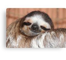 Buttercup the Sloth Canvas Print