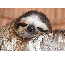 Buttercup the Sloth Photographic Print