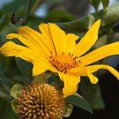 Marigold Tree by Robyn Selem