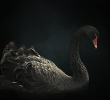 The Black Swan by EbyArts