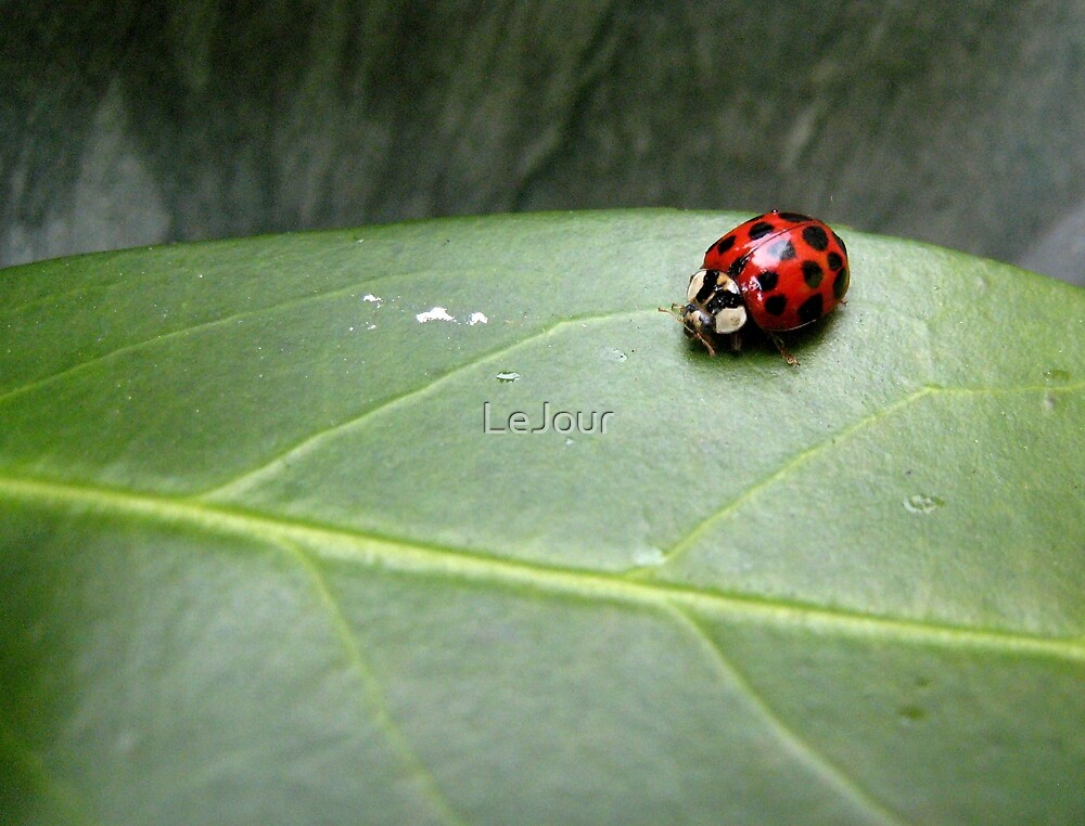 Ladybird on a leaf by LeJour