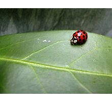 Ladybird on a leaf Photographic Print