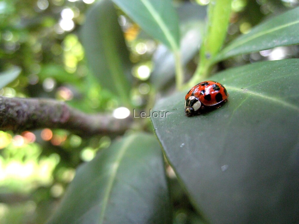 Ladybird on a leaf (2) by LeJour
