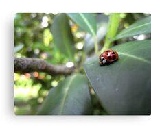 Ladybird on a leaf (2) Canvas Print