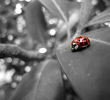 Ladybird on a leaf (3) by LeJour