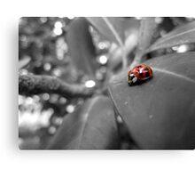 Ladybird on a leaf (3) Canvas Print
