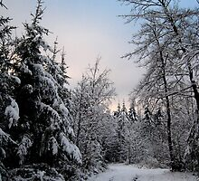 Winter Wonderland, Germany (2) by LeJour
