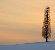 Lone tree by Paul Malandain