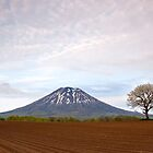 Two trees & Mt Yotei by Paul Malandain