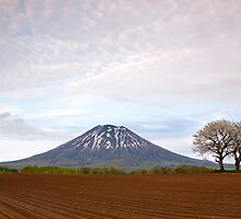 Two trees & Mt Yotei by Paul Malandain