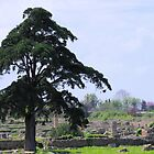 Tree At Paestum by Francis Drake