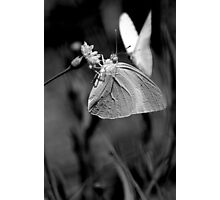 Butterfly in black and white Photographic Print