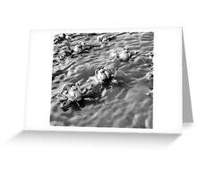 Crabs Emerging, Moreton Bay Greeting Card