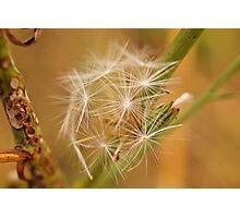 Fairy Flower Photographic Print