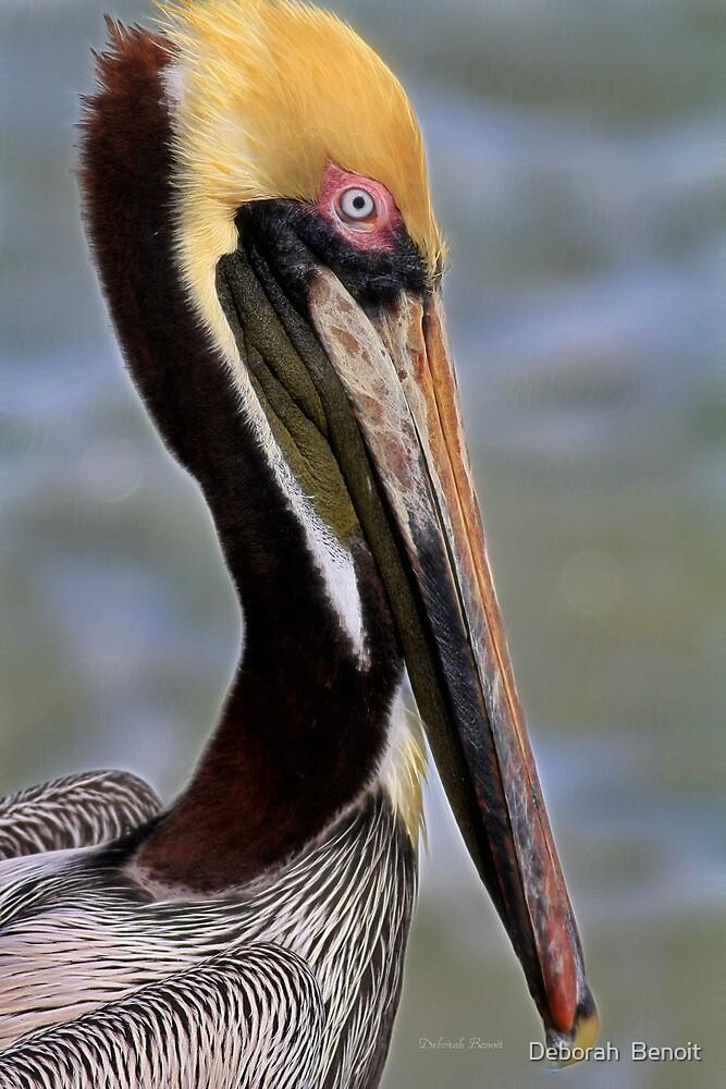 Blue Eyed Pelican by Deborah  Benoit