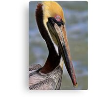 Blue Eyed Pelican Canvas Print