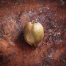 Actinidia deliciosa by MikkoEevert