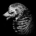A Turkey? by OzzieBennett