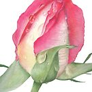 Pink Rose - Morning Dew - Greeting Card 2 by Belinda Lindhardt