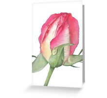 Pink Rose - Morning Dew - Greeting Card 2 Greeting Card