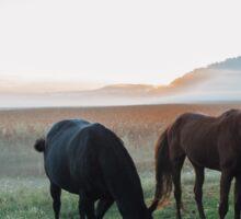 Beautiful horses Sticker