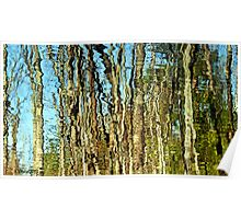Treeflection at Salem Pond Poster