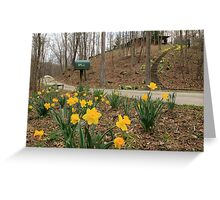 Country Daffodils Greeting Card