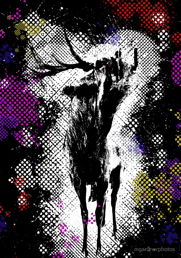 The Stag by mgardnerphotos