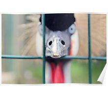 A Crazy Bird Poster