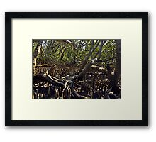 Fingers in the mangroves Framed Print