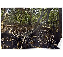 Fingers in the mangroves Poster