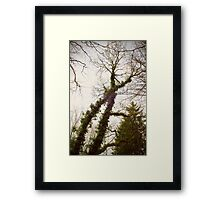 X-tree Framed Print