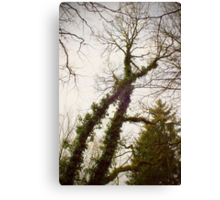 X-tree Canvas Print