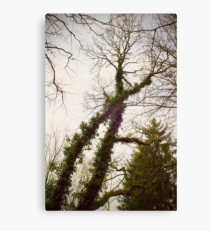 X-tree Canvas Print
