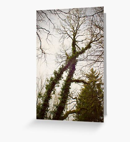 X-tree Greeting Card