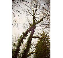 X-tree Photographic Print