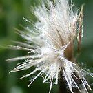 Natural Yarn by Greybeard