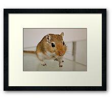 Gerbil cuteness Framed Print