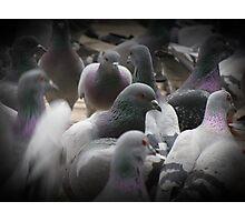 Pigeonsss... Photographic Print
