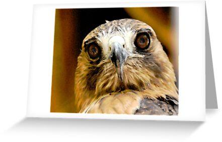 Hawk-Eye by Lois  Bryan
