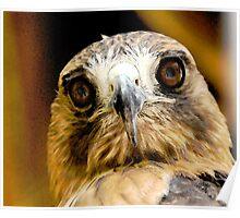 Hawk-Eye Poster