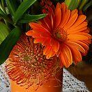 Orange Gerbera by Gilberte