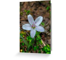 Woodland Wildflower Greeting Card